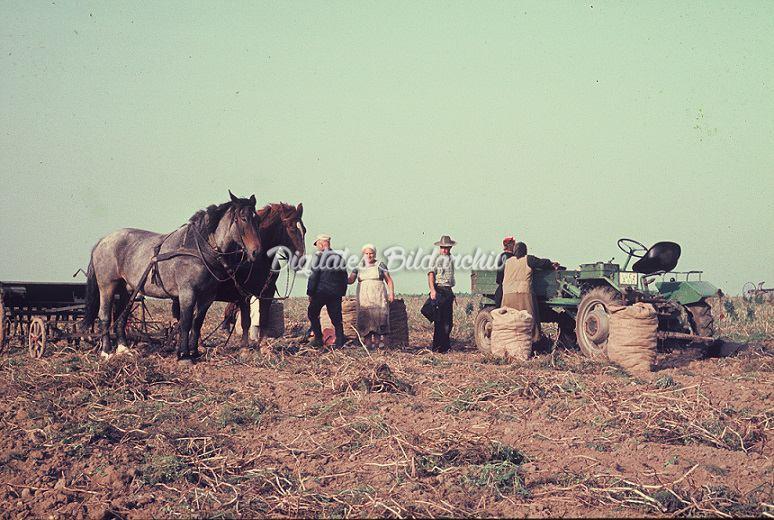 Pferde Trecker